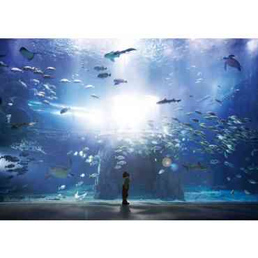 [Seoul Pass] Aqua Planet Yeosu Discount Ticket