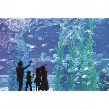 [Seoul Pass] Lotte World Theme Park + Lotte Aquarium Day Pass Ticket